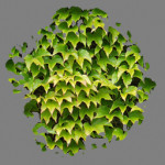 An ivy patch Texture synth Texture synth fig05b 150x150